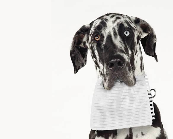 Useful documents at Kelowna Animal Hospital