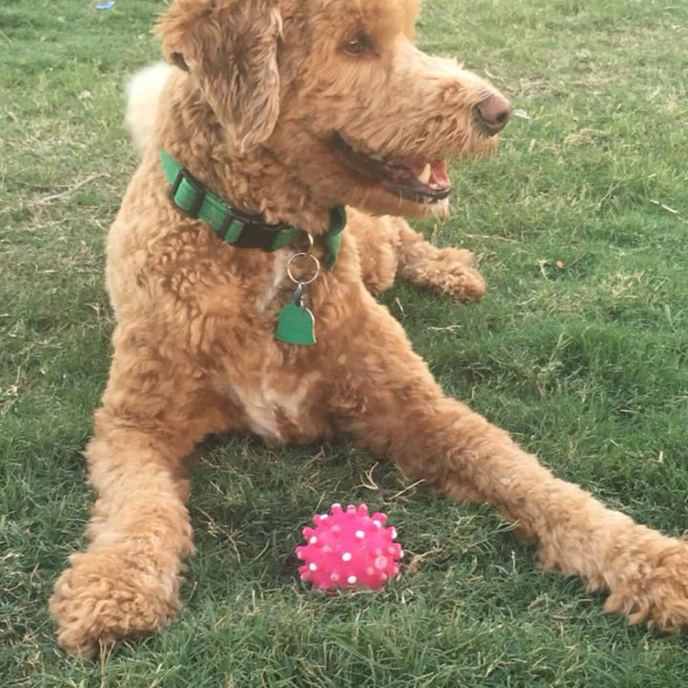 Resident dog playing with toy at Grand Reserve Katy