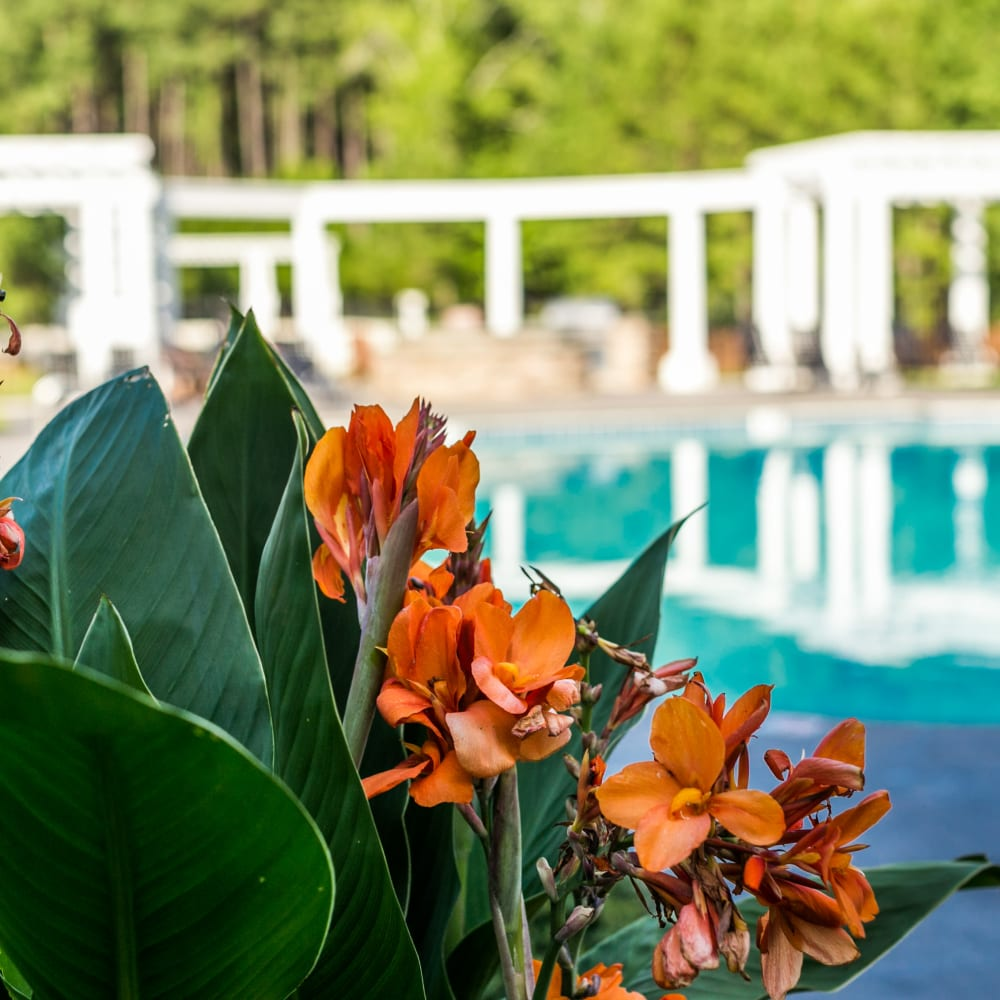 Close up of beautiful flowers by Bryant at Summerville's swimming pool in Summerville, South Carolina