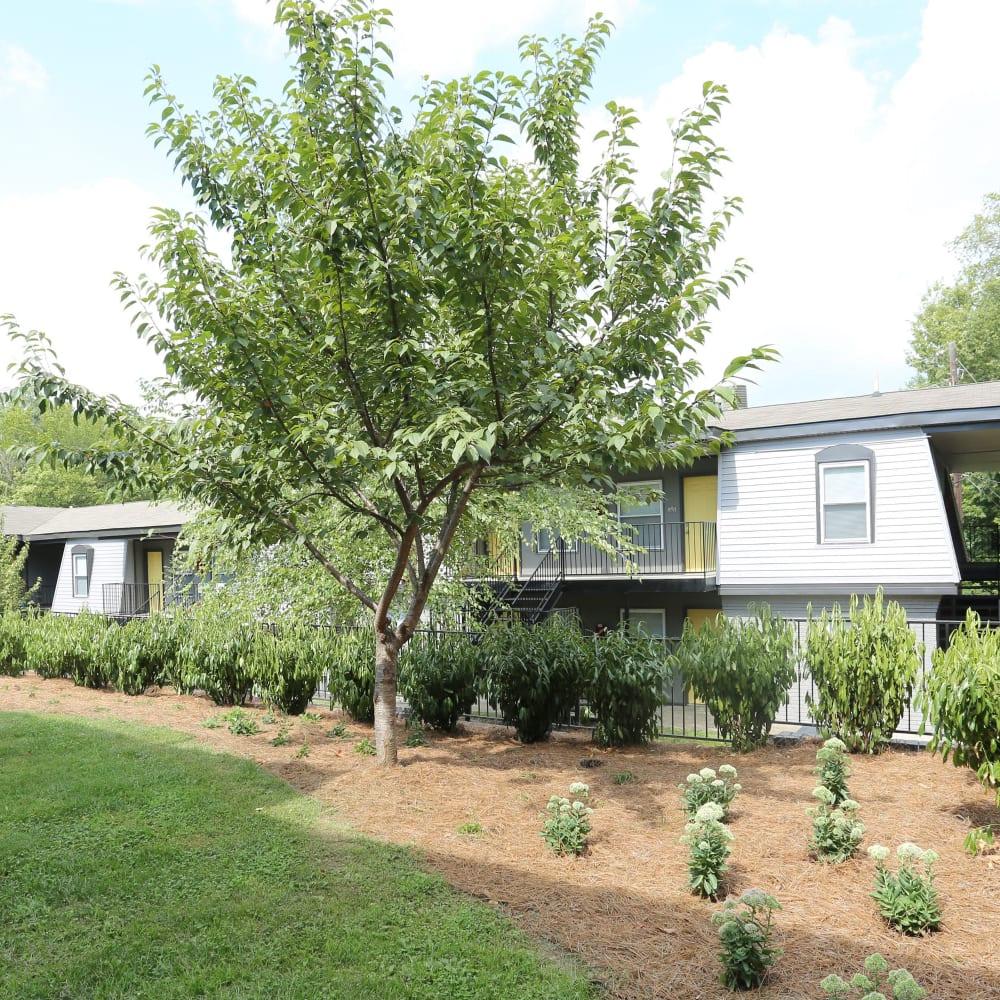 Beautiful lawns at Clifton Ridge Apartments in Louisville, Kentucky