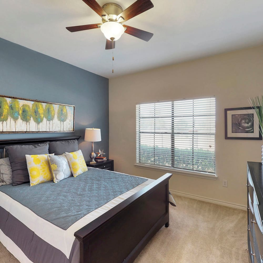 Model apartment's primary bedroom with a ceiling fan and an accent wall at Oaks Riverchase in Coppell, Texas