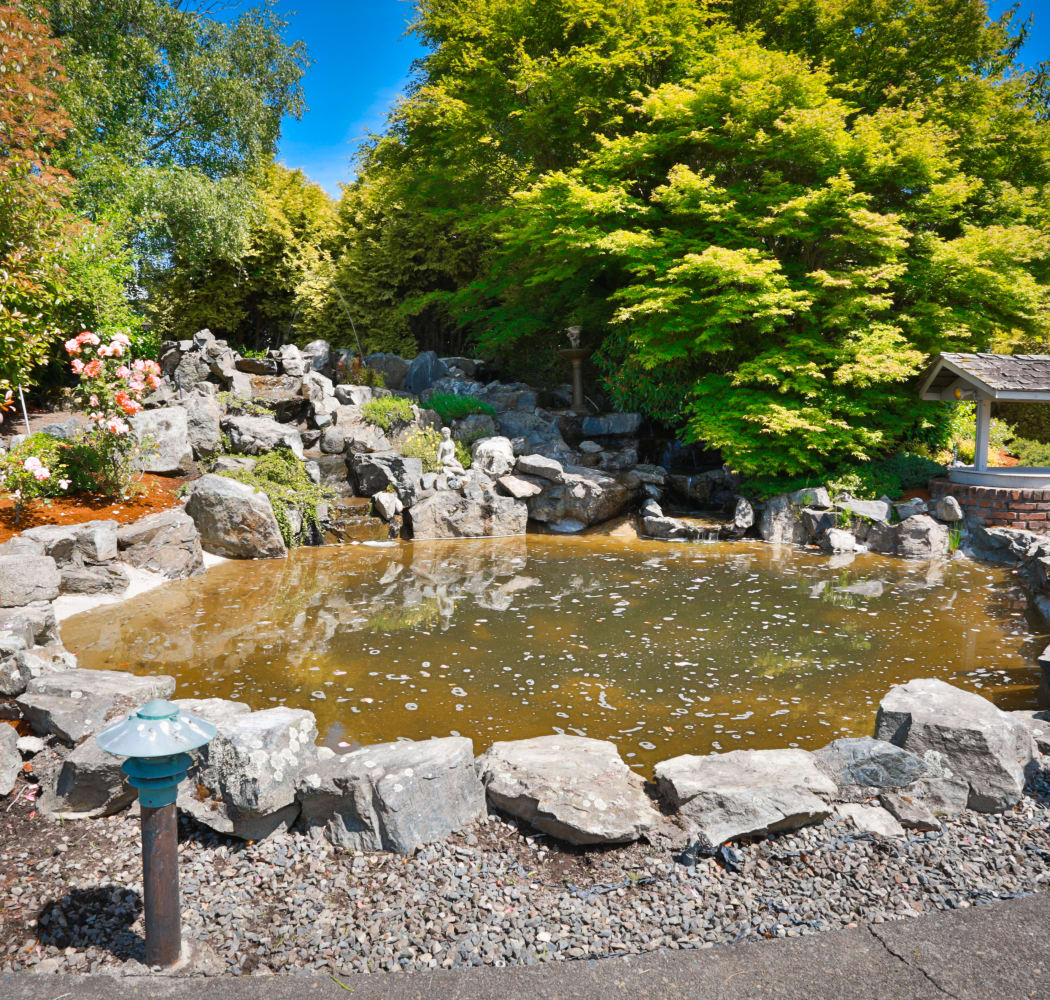 Duck pond at Fraser Tolmie Apartments in Victoria, British Columbia