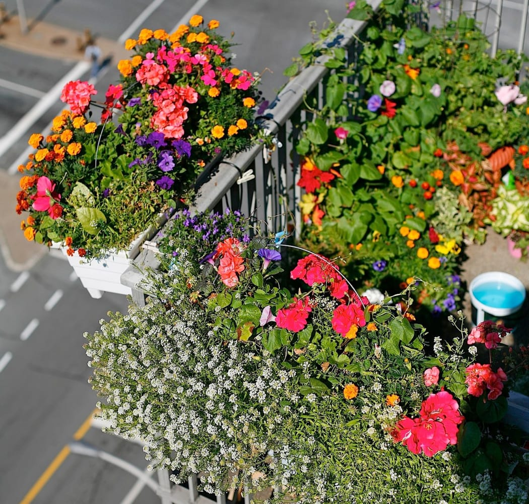 Balcony gardens at Halifax Apartments in Halifax
