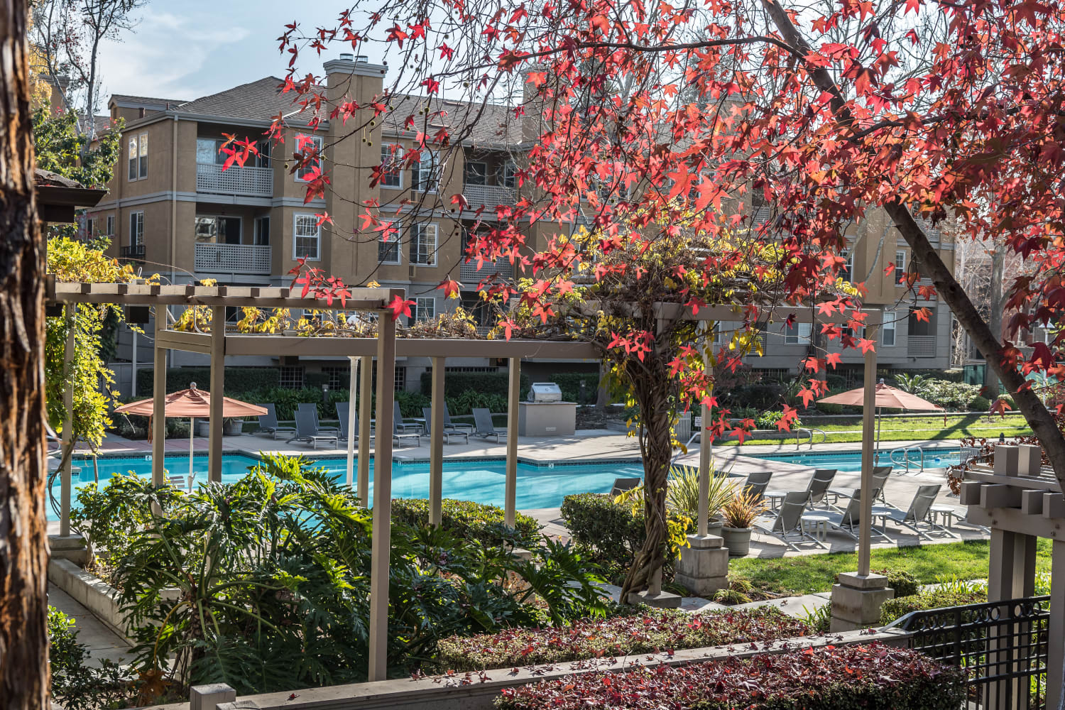 Sparkling swimming pool at Bella Vista Apartments in Santa Clara, California
