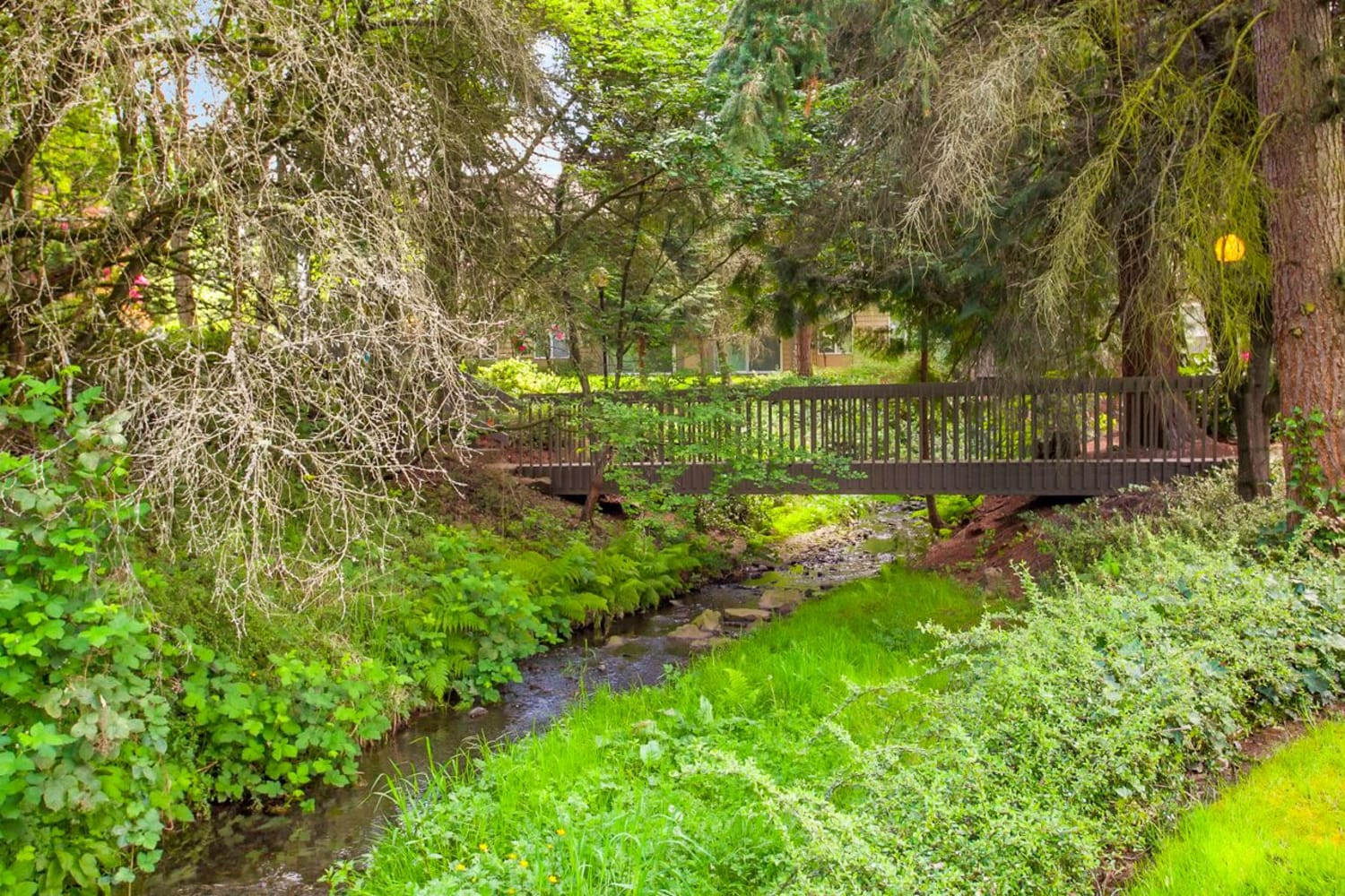 Walking bridge through nature at The VUE in Kirkland, Washington