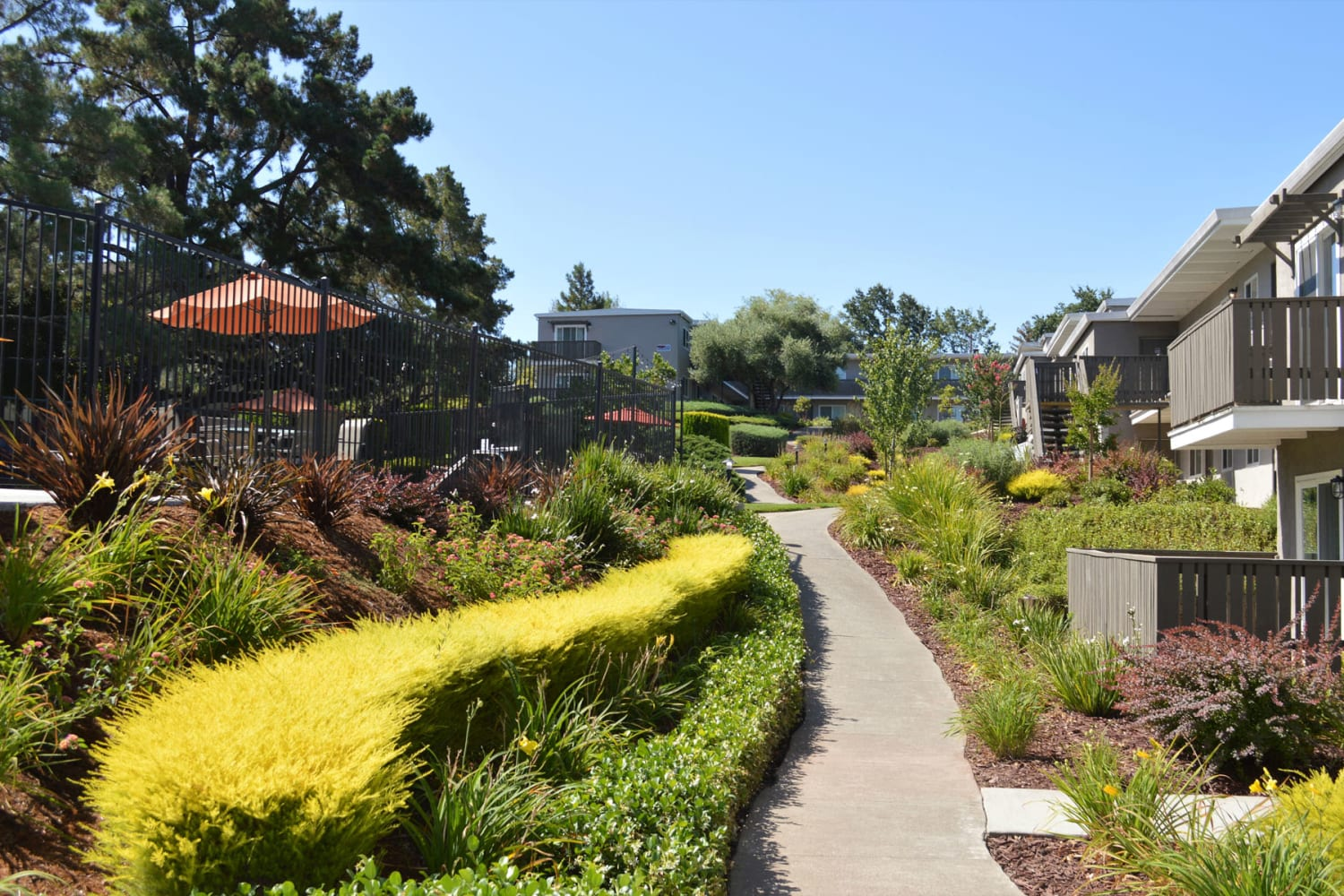 Lush landscaping along a pathway outside resident buildings at Pleasanton Heights in Pleasanton, California