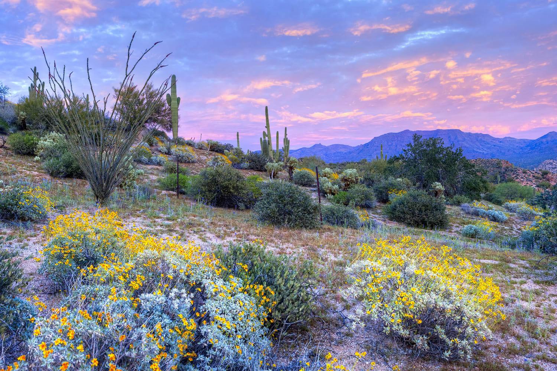 Nature near Luxe @ Ocotillo in Chandler, Arizona