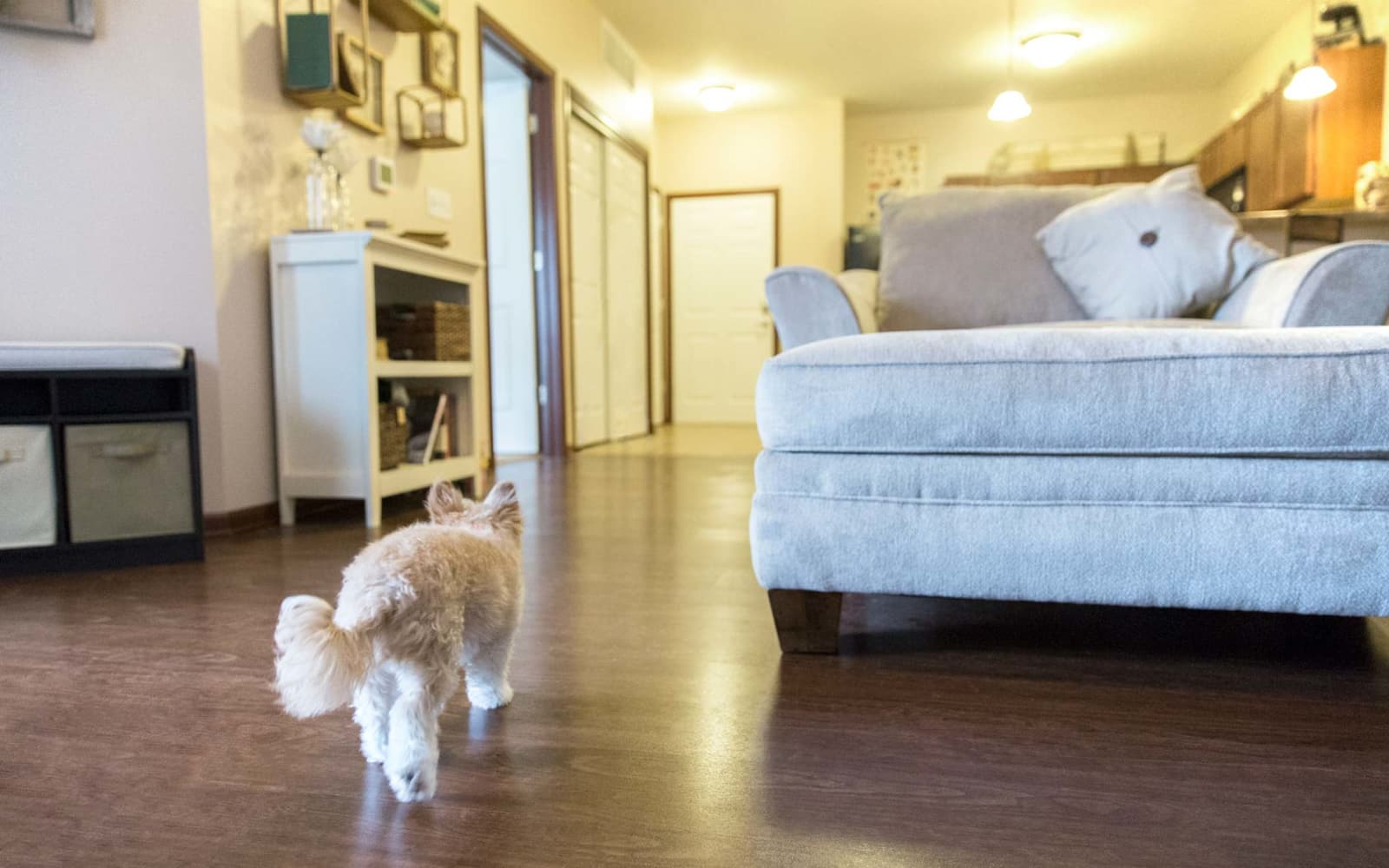 A dog walking through an apartment living room at Ironwood in Altoona, Iowa