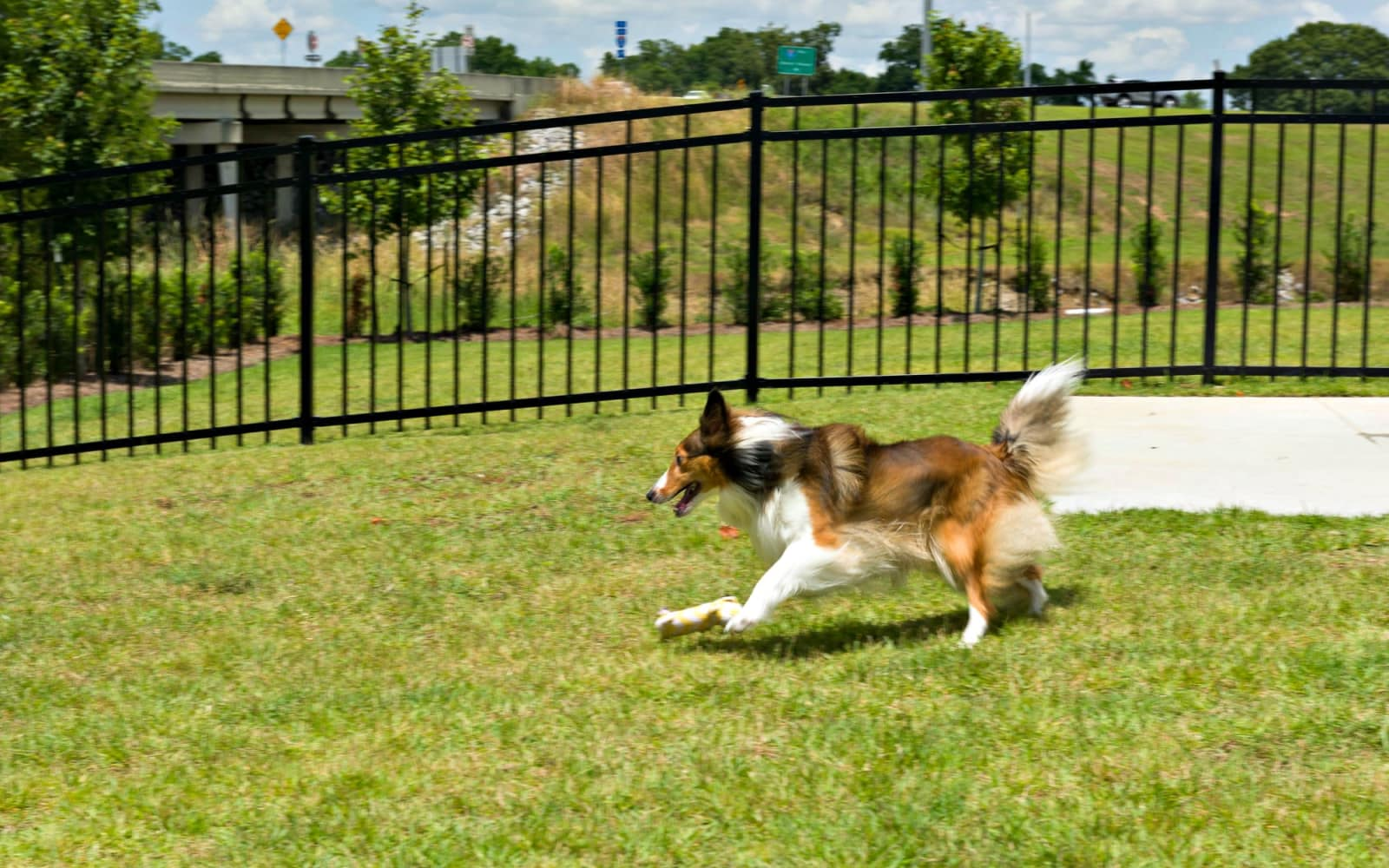 Dog running in the grass at The Addison in Baton Rouge, Louisiana