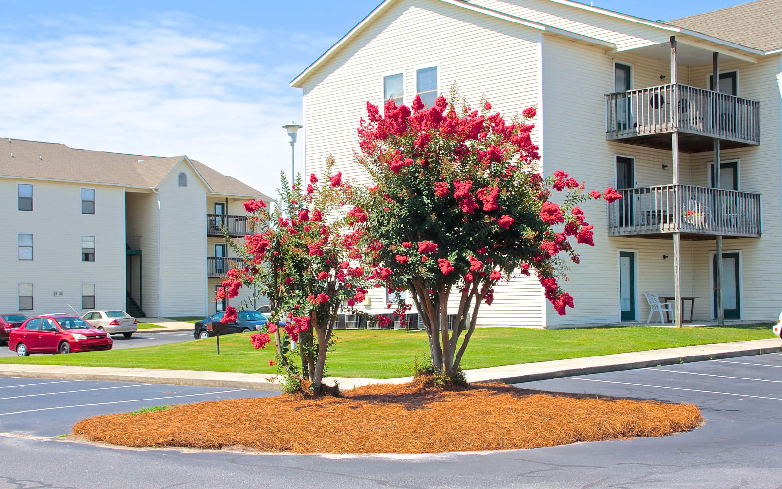 Beautiful blooming trees outside of Falcon Village Apartments in Fayetteville, North Carolina