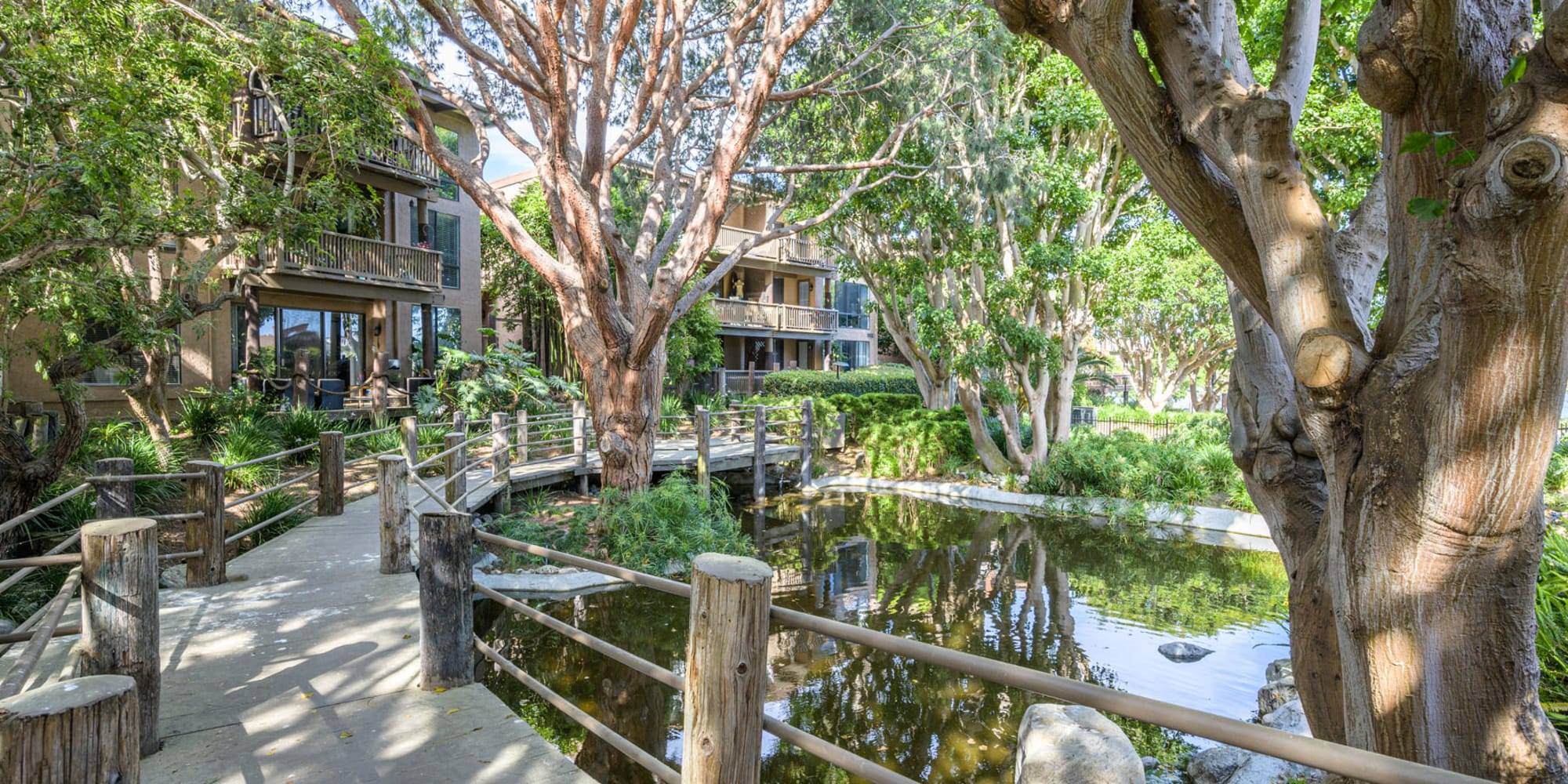 Wooden walkways winding through the trees above the lagoon at Mariners Village in Marina del Rey, California