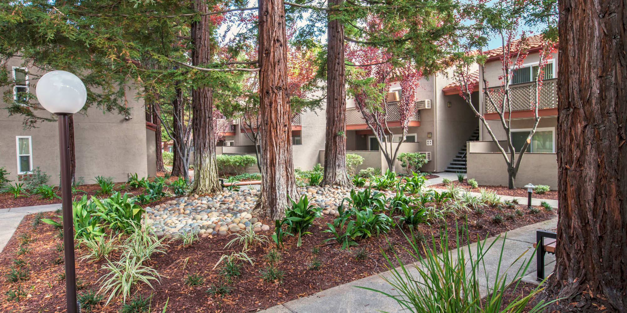 Professionally maintained landscaping and mature trees between resident buildings at Valley Plaza Villages in Pleasanton, California