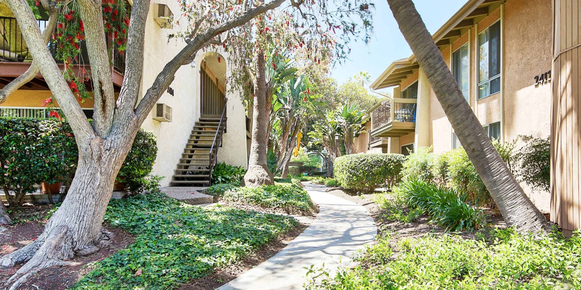 Lush flora and palm trees between resident buildings at Mediterranean Village Apartments in Costa Mesa, California