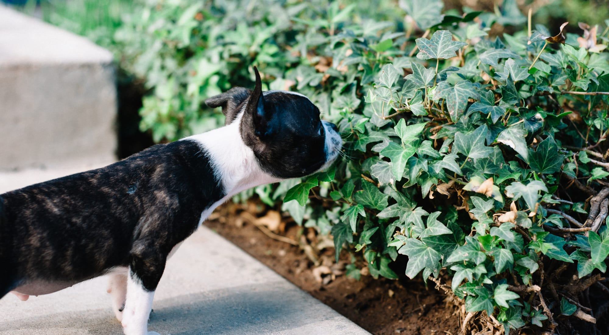 Pet-friendly apartments at Haven New Providence in New Providence, New Jersey