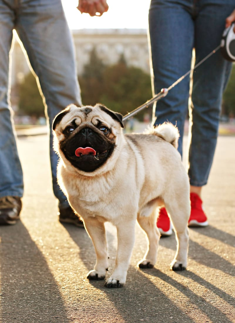 Breed restrictions at The Marquis of State Thomas in Dallas, Texas