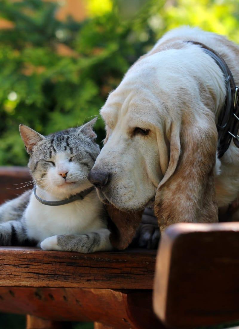 Two pets maximum per apartment at Marq Iliff Station in Aurora, Colorado