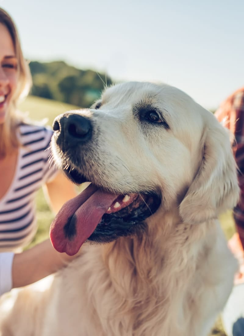 View our pet policy at Alante at the Islands in Chandler, Arizona