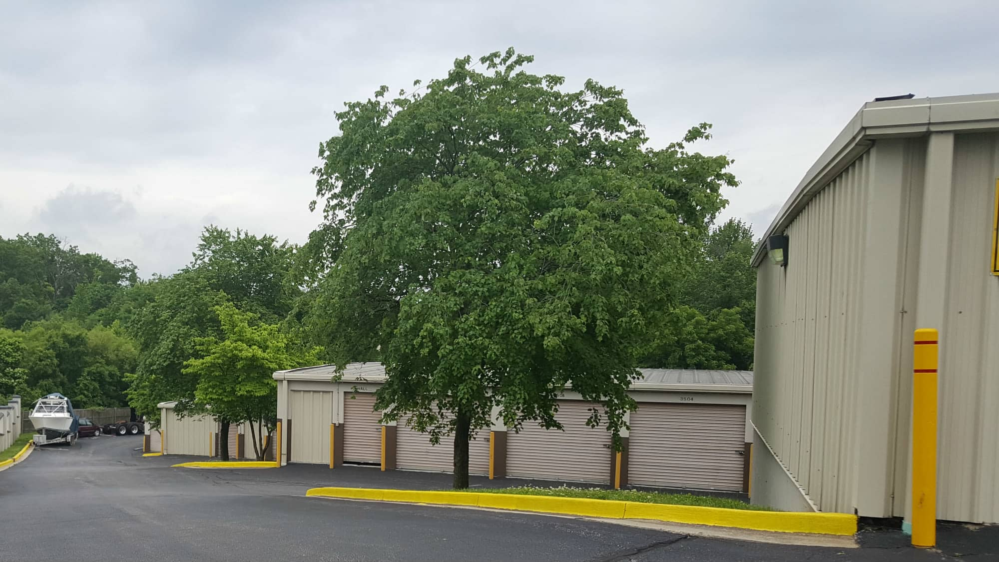 Tree at Seabrook Self Storage in Seabrook, Maryland
