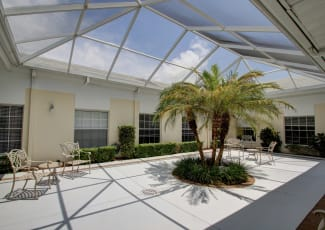 A large palm tree indoors at Summerfield Senior Living in Bradenton, Florida