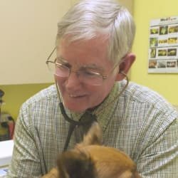 NVA veterinarian caring for a dog
