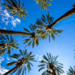 View the neighborhood surrounding Avenida Palm Desert's senior apartment homes in Palm Desert, California.