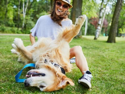 View the pet policy for Lincoln Village in Riverside, California