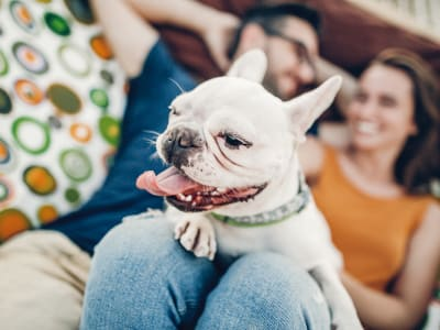 Learn about our pet policy at The Manchester Apartments in Euless, Texas