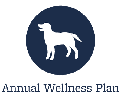 Wellness exams at Starch Pet Hospital in Des Moines, Iowa