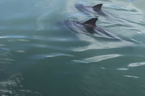 Dolphins were spotted while All Seasons Naples was on their tour in Naples, Florida