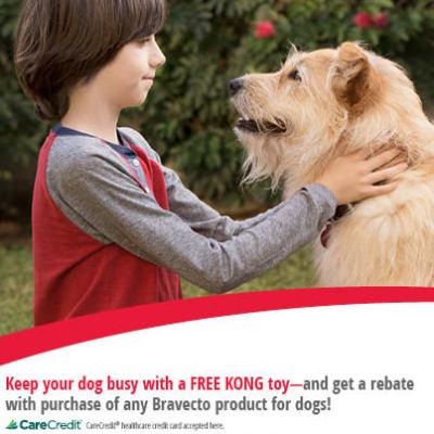 Free kong toy at Kitsap Veterinary Hospital in Port Orchard, Washington