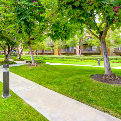 Walking path between green trees and well-manicured grass at Sofi Irvine in Irvine, California