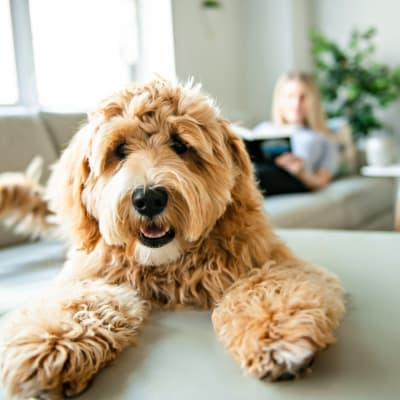 Dog sitting next to their owner on the couch at Lakeside Apartment Homes in Slidell, Louisiana