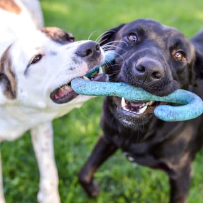 Link to our pet policy at Metropolitan Rockville Town Center in Rockville, Maryland