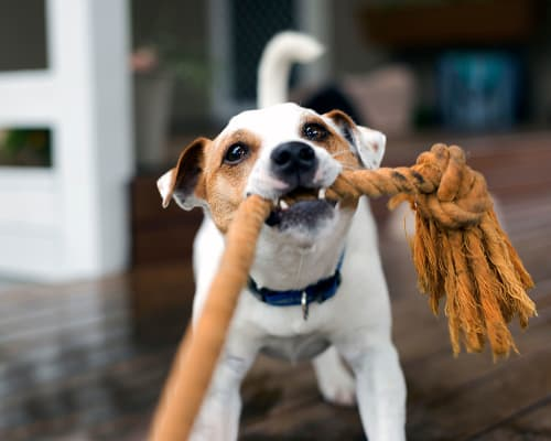 Pet friendly apartments at The Oaks Of Vernon Hills in Vernon Hills, Illinois