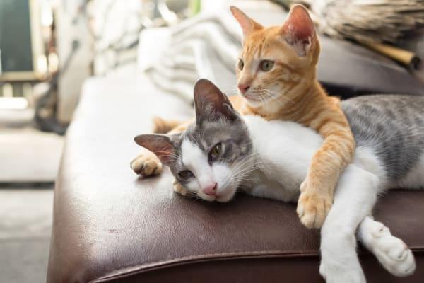 Pet-friendly apartments at Bella Fiore