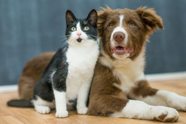 Pets at Maple Oaks Estates