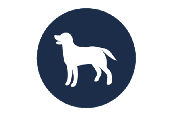 Chiropractic services for your pets in Oro Valley