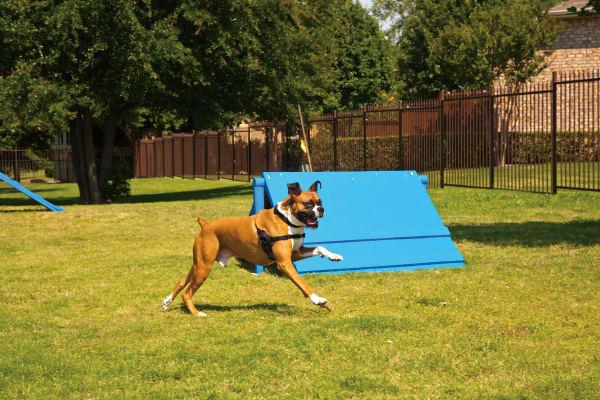 A labradoodle puppy wanting to play at Estancia at Ridgeview Ranch