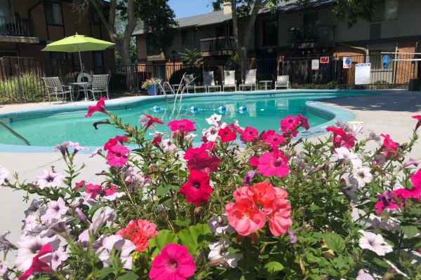 Sparkling swimming pool on a beautiful day at Forest Cove Apartments