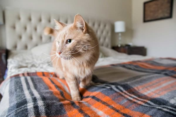 A Resident's cat on the bed at Woodland Reserve in Ankeny, Iowa