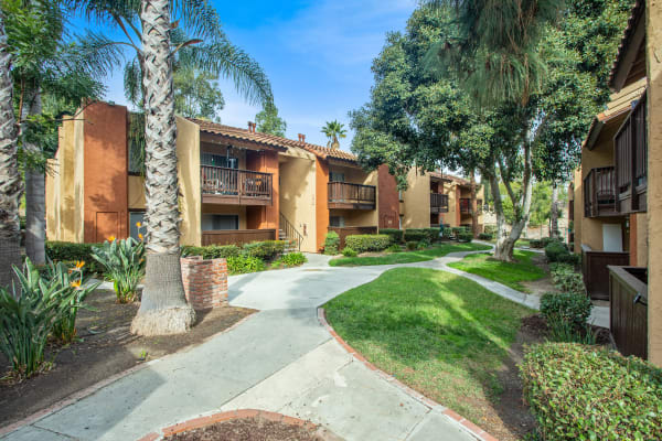 Walkway with Palm Tree and Lush Landscaping at Shadow Ridge Apartments in Oceanside