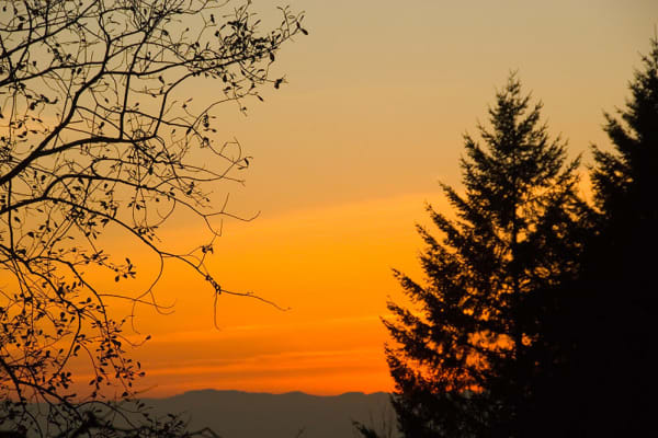 The sun setting behind a treeline at Touchmark in the West Hills in Portland, Oregon