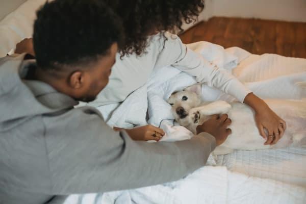 Pet friendly apartments in Houston