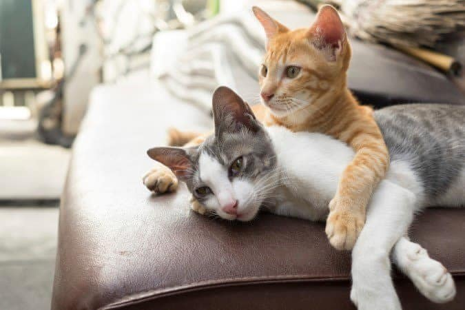 We welcome all your furry friends at Spice Tree Apartments