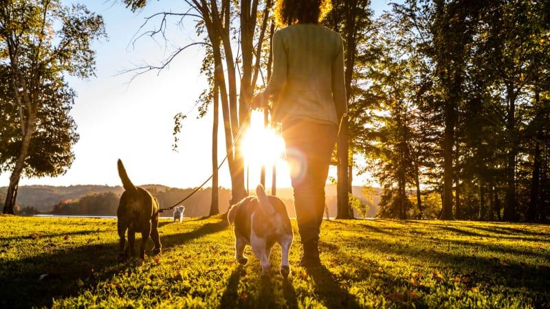 Resident walking dogs at Amber Park in Sacramento, California