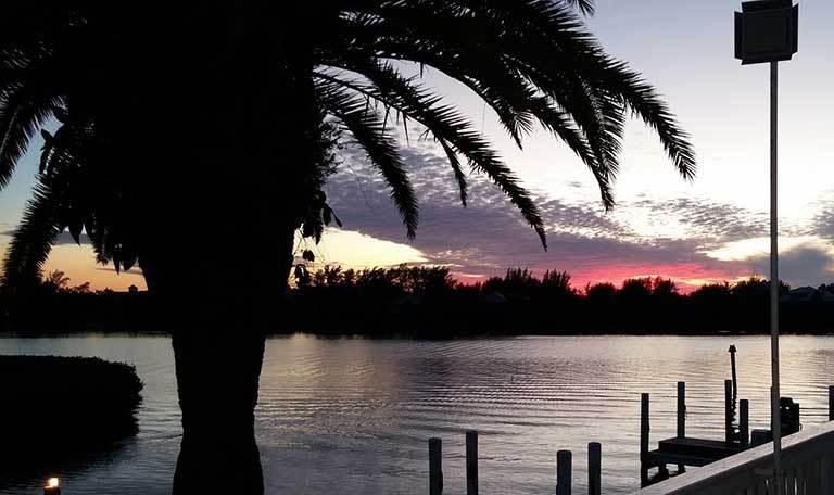 Palm tree at Aquamarina Palm Harbour in Cape Haze, Florida
