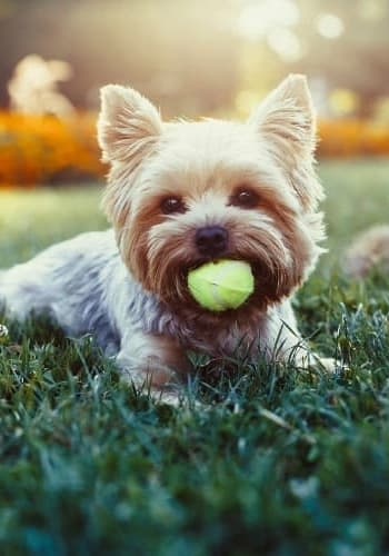 Dog with ball in Great Mills, Maryland near Villas at Greenview West