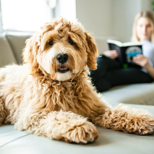 View our pet policy at The Mills at Lehigh in Bethlehem, Pennsylvania