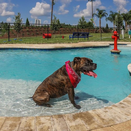 Happy dog in the dog pool at Palm Bay Club in Jacksonville, Florida