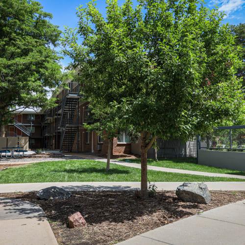 Outdoor green spaces at The Wesley in Denver, Colorado